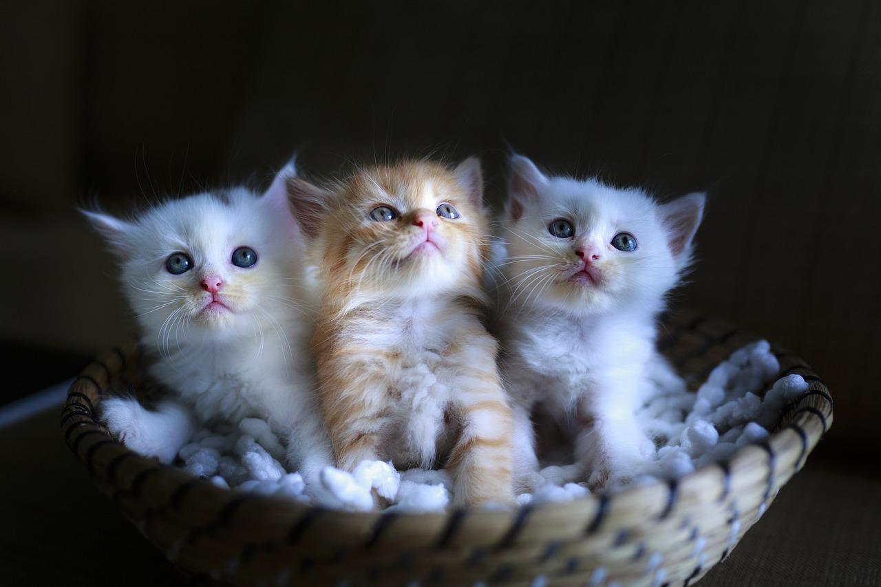 猫ひろしはオリンピック後日本で活動するのか?国籍はそのまま?